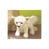 Arctic Fox Kit Plush 8""