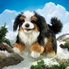 Bernese Mountain Dog Puppet